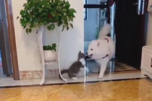 ببینید | استقبال بینظیر گربهای مهربان از دوست سگش