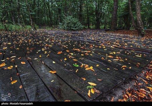 بارش اولین باران پاییزی در پارک جنگلی النگدره - گرگان