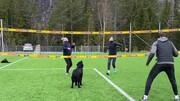 ببینید | سگ والیبالیستی که جهان را شگفتزده کرده است