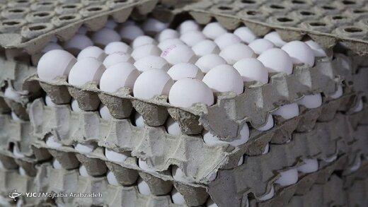 قیمت تخم مرغ در مغازه ها دو برابر نرخ مصوب!
