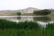 تراز آبی تالاب بین المللی قوری گل ۲۳ سانتی افزایش یافت