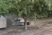 ببینید | برداشت میوههای درختی در چند ثانیه!