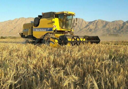 برآورد تولید ۱۲۵ هزار تن گندم در سال آینده