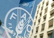 حمایت فائو از ایران برای تقویت تأمین مالی مسائل مرتبط به تغییر اقلیم