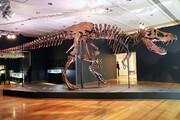 اسکلت دایناسور رکورد حراج را زد