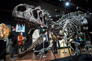 تصاویر | حراج 1 میلیون پوندی بقایای دایناسور گوشتخوار آلوسور با 150 میلیون سال قدمت