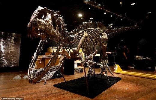 حراج 1 میلیون پوندی بقایای دایناسور گوشتخوار آلوسور با 150 میلیون سال قدمت