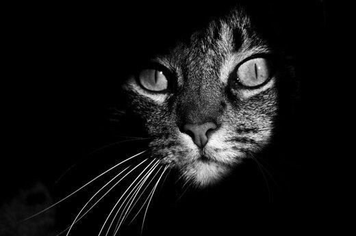 ببینید | واکنش خندهدار گربه به فریادهای زن همسایه