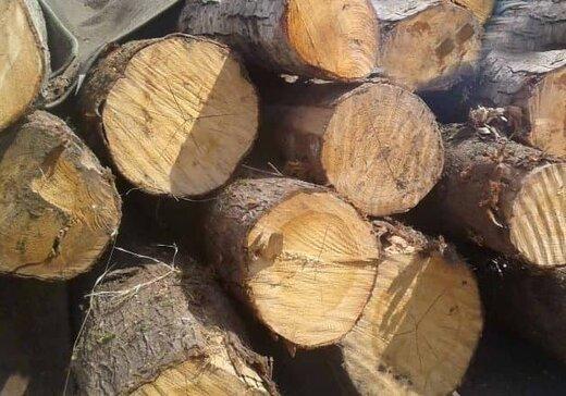 """کشف ۳۴۰ کیلو چوب جنگلی قاچاق در """"لردگان"""""""