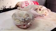 نرخ ۱۳ هزار تومانی مرغ زنده غیرمنطقی است/ قیمت هر کیلو مرغ ۲۳ هزار تومان