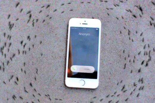 ببینید   تاثیر باورنکردنی امواج موبایل بر مورچهها