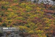 ببینید   پاییز هزار رنگ در دامنه ارتفاعات البرز