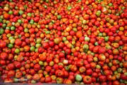 ببینید   دلیل گرانی و افزایش قیمت گوجه چیست؟