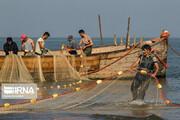 ببینید | کسب روزی از دریای خزر؛ صید ماهیان استخوانی