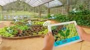 راهاندازی گلخانه هوشمند ۲۰۰۰۰ مترمربعی جهاد دانشگاهی در ارومیه