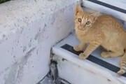ببینید | ترفند خندهدار موش برای فرار از چنگال گربه؛ کشیدن جیغ بنفش