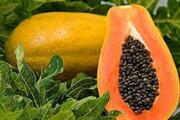 ببینید | با ابتکار زوج کارآفرین، میوهای بسیار لذیذ در راه بازارهای ایران