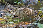 ببینید   حرکات موزون یک پرنده برای رسیدن به غذایی بهتر