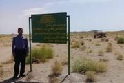 ۹۰۰ هکتار نهالکاری درشهرستان شاهرود انجامشد