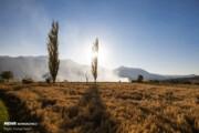 تصاویر   برداشت سنتی برنج در الموت