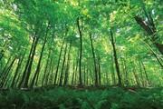 سربرج ؛ این جنگل جیغ میکشد/ این جنگل نفرین شده است؟