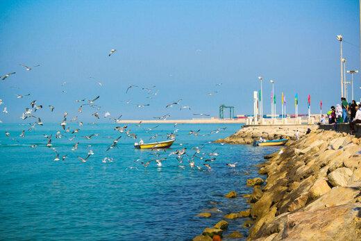 ببینید | ماجرای خلق صحنههایی زیبا و لذتبخش در خلیج فارس چه بود؟