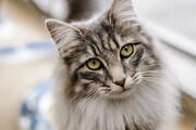 ببینید | ویدئویی که در فضای مجازی میلیونها بار دیده شد؛ احترام یک کارگر ساده به حقوق حیوانات