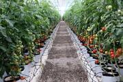 توسعه گلخانههای خوزستان برای افزایش تولید محصول