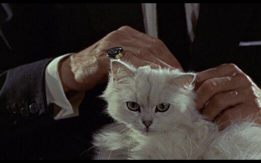 ببینید | گربه جیمز باند در ماموریت ویژه و سری