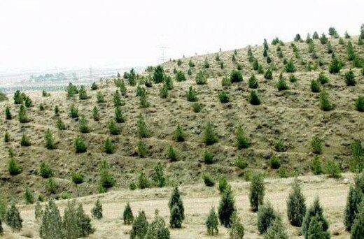 اجرای عملیات جنگل کاری و مراقبت در سطح ۸۸ هکتار از اراضی شهرستان مهدیشهر