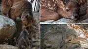 آخرین جزئیات از زاد و ولد و مرگ و میر حیوانات در باغ وحش ارم