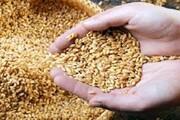 کمبود هزار تنی بذر گندم در لرستان