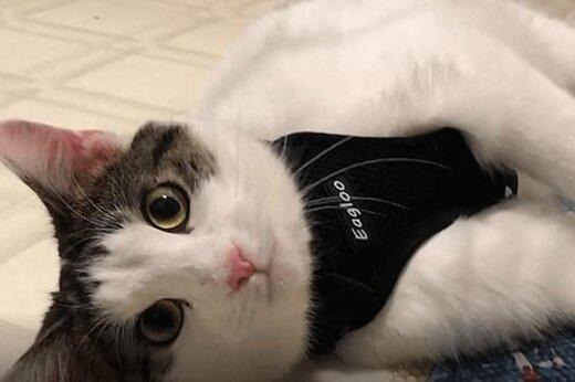 ببینید | پربازدیدترین خبر ترکیه؛ ترس و لرز گربهای که از زیر آوار زلزله ترکیه نجات یافت