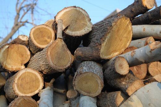 اختصاص ۱۰۰ هکتار از اراضی البرز به تولید چوب