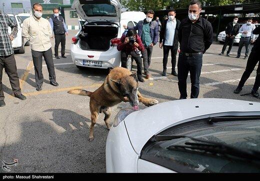 طرح کشف مواد مخدر توسط سگ های مواد یاب پلیس