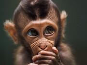 ببینید | ژستهای جالبِ حیوانات مقابل دوربین عکاسی