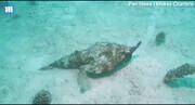 ببینید | تصاویری باورنکردنی از راه رفتن عجیبترین ماهی دنیا در کف دریای کارائیب