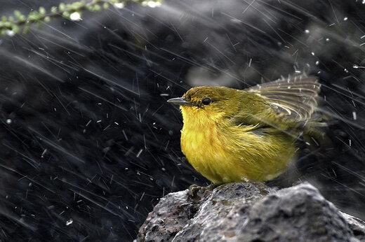 ببینید | گرم کردن پرنده با سشوار در روزهای سرد