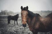 ببیند   فرار جالب اسبها و بازگشت به طبیعت