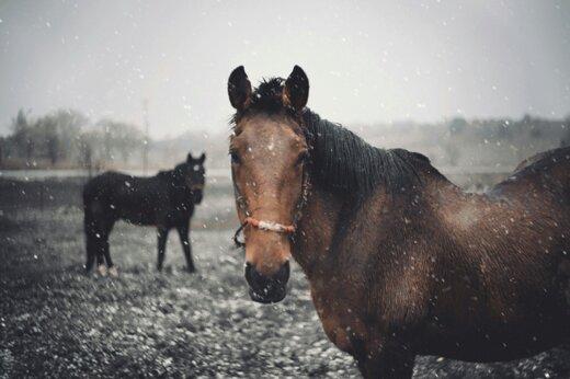 ببیند | فرار جالب اسبها و بازگشت به طبیعت