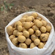 کشف اقلام دارویی قاچاق در سیبزمینی