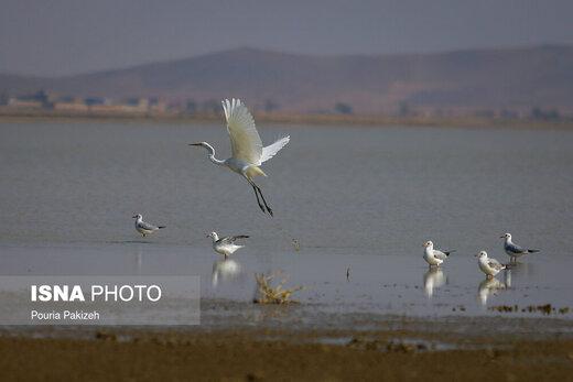 فرود پرندگان مهاجر در تالاب «آق گل»