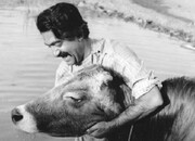 قصه «عزاداران بیل» چطور به فیلمنامه «گاو» تبدیل شد؟