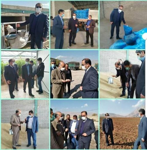  بازدید رئیس سازمان جهاد کشاورزی لرستان از روند تهیه ، توزیع  و تولید نهادهای دامی در شهرستان خرم آباد