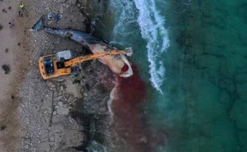 مرگ غم انگیز یک نهنگ در سواحل جزیره کیش
