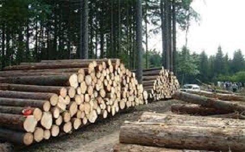 باند بزرگ قطع درختان جنگلی در شیراز متلاشی شد