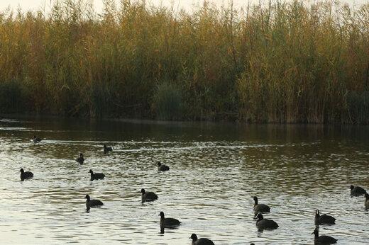 ببینید   میهمانی پرندگان مهاجر در چهارمحال و بختیاری