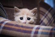 ببینید | تلاش تماشایی و جالب بچه گربه برای رسیدن به غذا