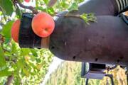 ببینید |  شیوهای خیرهکننده در چیدن میوه با استفاده هوش مصنوعی