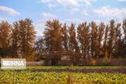 ببینید | زیبایی مسحورکننده پاییز در اصفهان